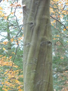 Longwood Gardens Woods - November 2014