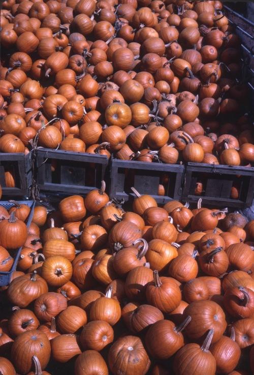 1966 Nov Pick a Pumpkin