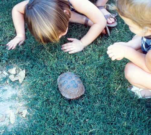 1972 Sep Scott and Sherry with turtle in Tucson back yard