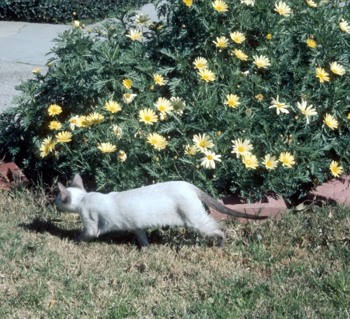 1974 Feb Ivan in the front yard Altadena