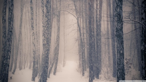 forest_in_winter-wallpaper-1920x1080