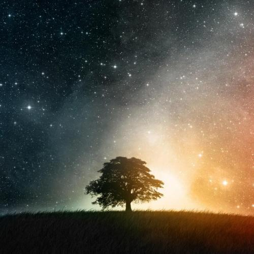 Universe and Tree, twitter.com