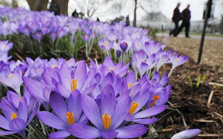 SpringFlowers09.jpg