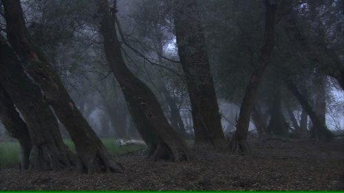 dusk-croatia-public-park-footage-framepool-com