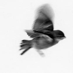 bird-flying-free