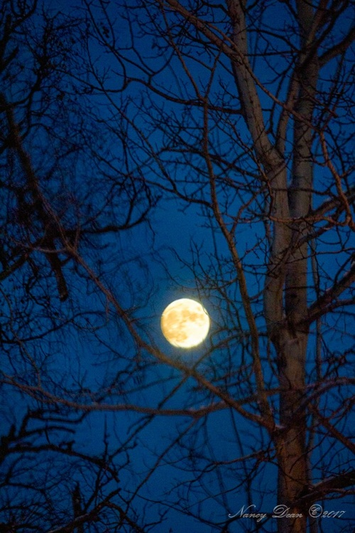 rising-moon-photo