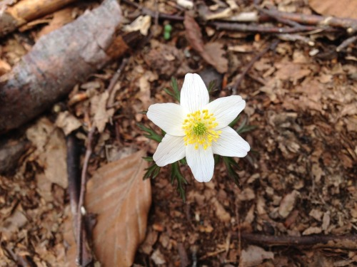 pxby-white-flower-spring